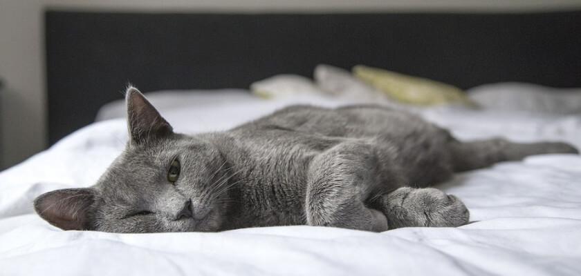 Katten myser i sängen